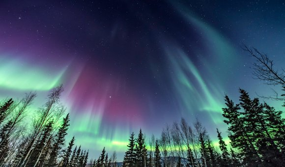 While in Alaska in the winter, my husband and I witnessed the most spectacular Aurora borealis  show I've ever seen. It changed and morphed, moving around the sky. The show was in all directions and overhead as well.