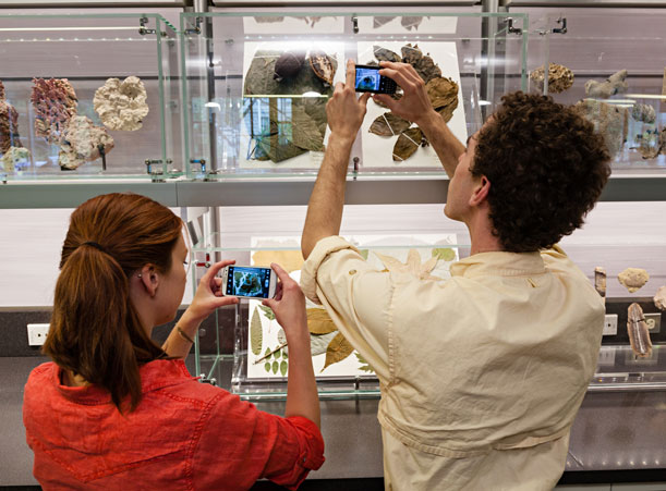 Museum specimens can be digitized and saved for future projects in a students digital field guides.