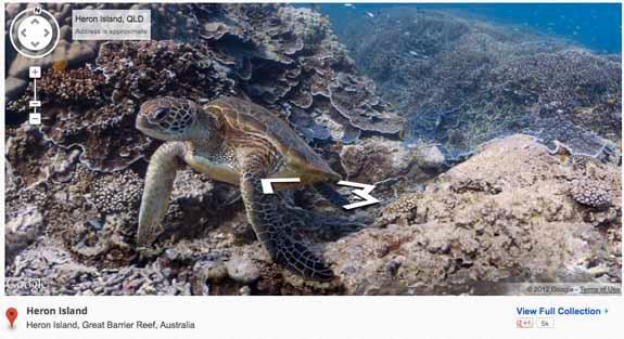 turtle-575.jpg