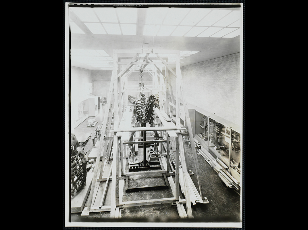 Brontosaurus at Yale Peabody Museum 1931