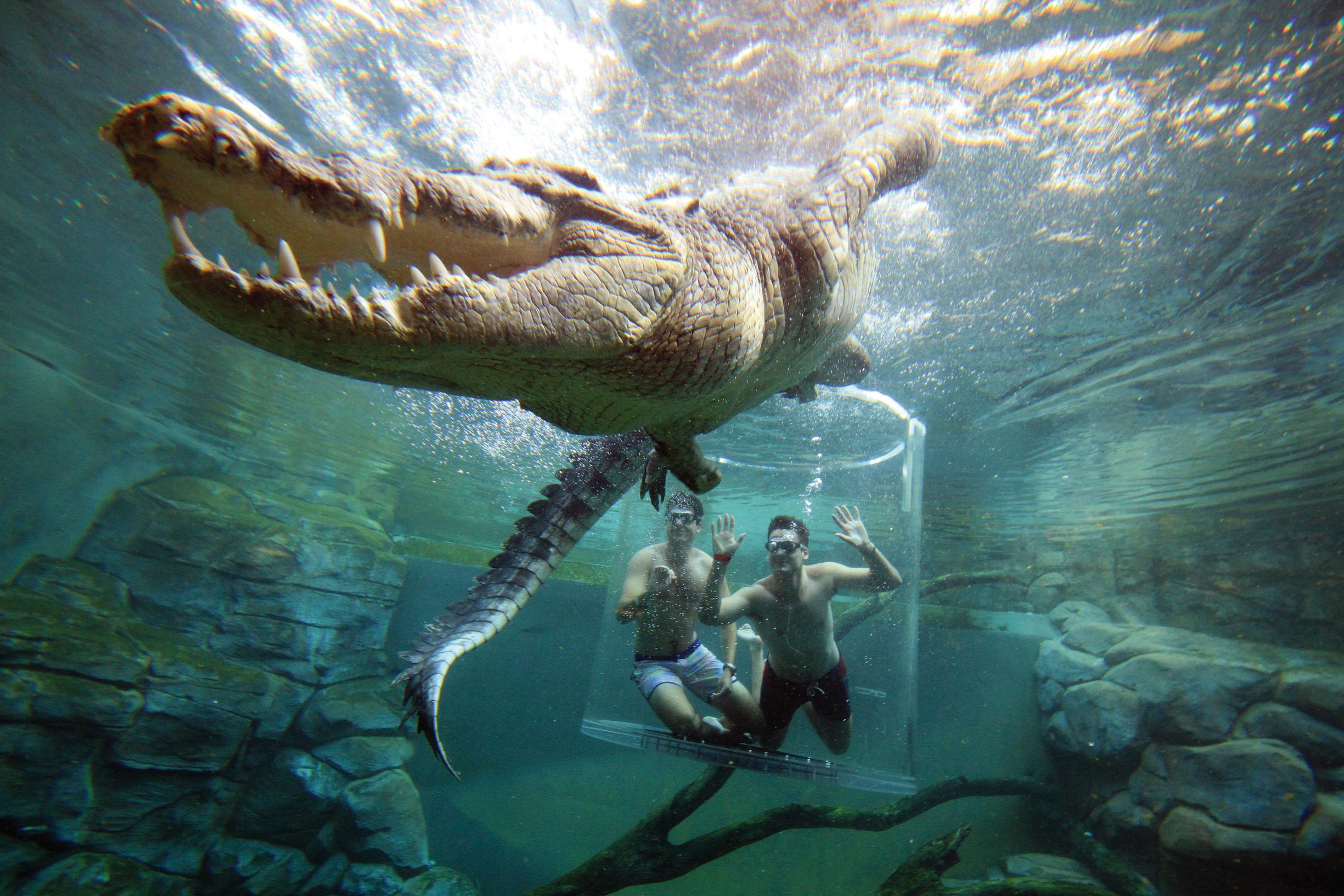 Crocosaurus Cove.jpg