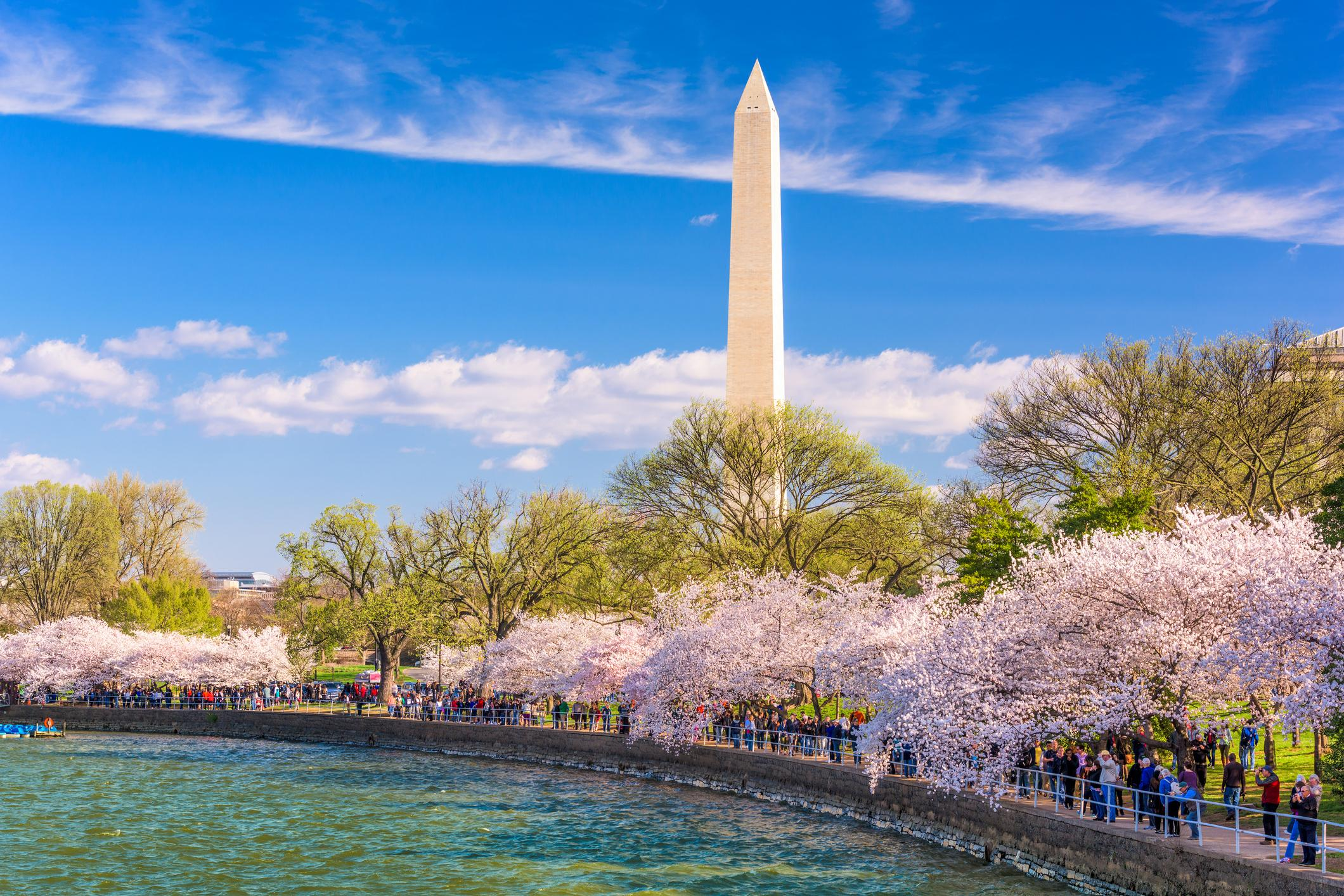 Crowds walk below cherry trees and the Washington Monument during the spring festival around the Tidal Basin.