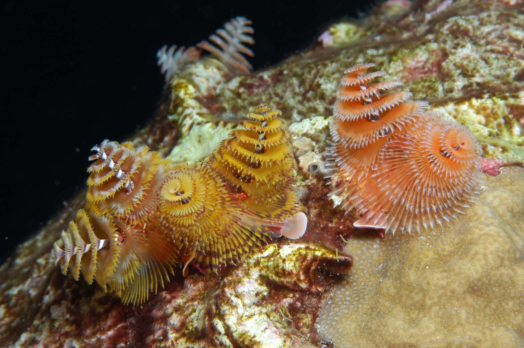 14 fun facts about marine bristle worms science smithsonian
