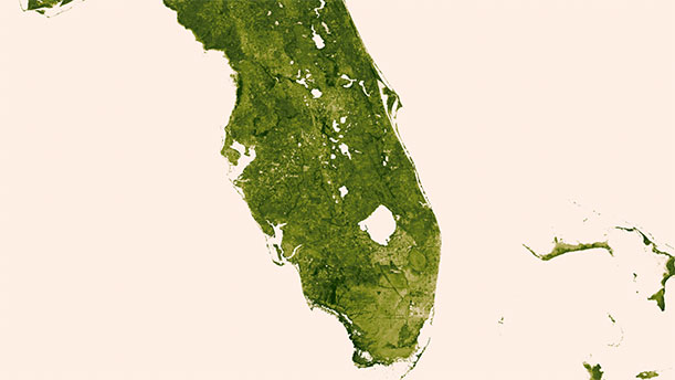 This view of Florida shows the state's leafy landscape.