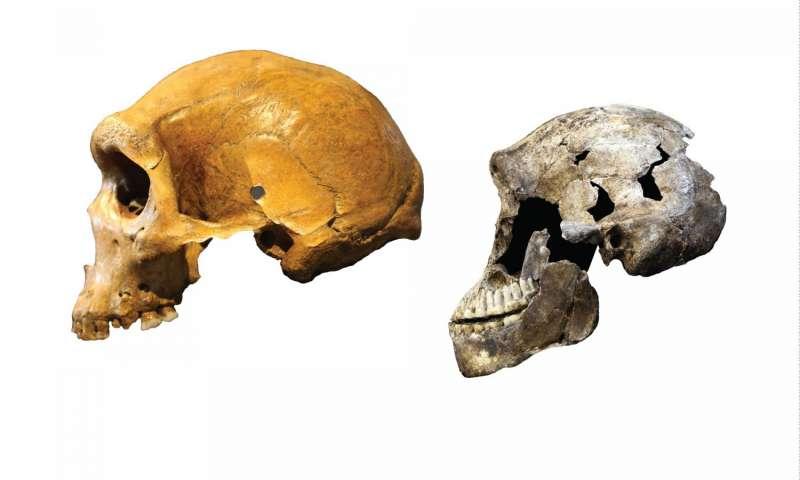 Skull Compare