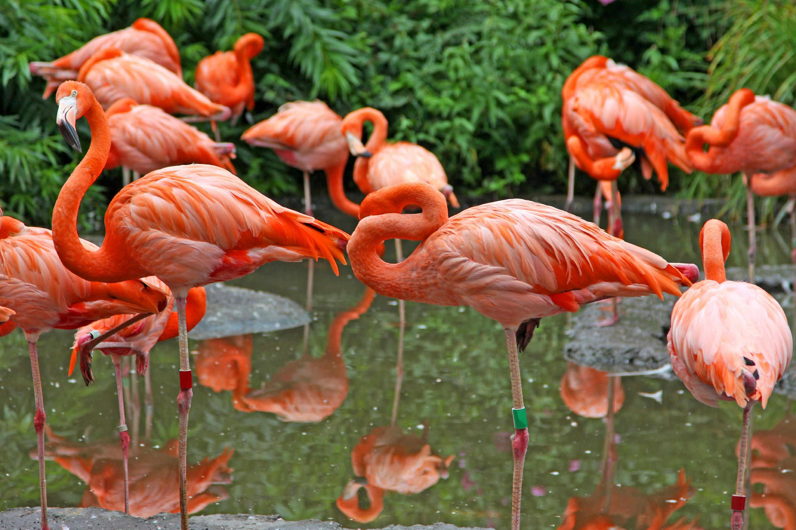 Flamingo Group on One Leg