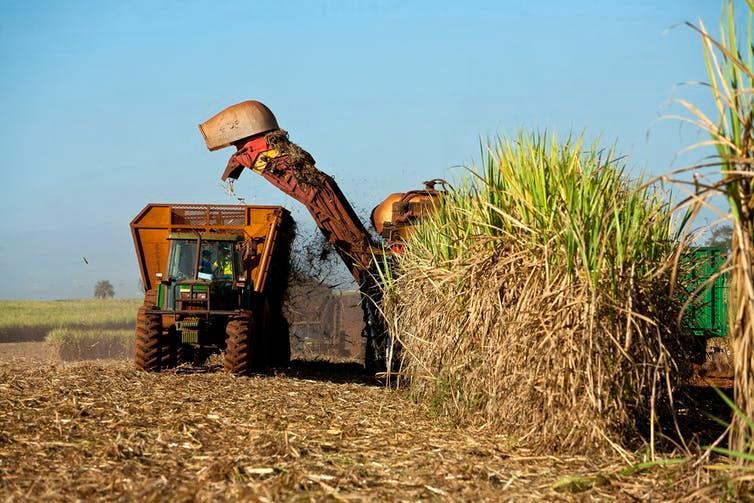 Harvesting sugarcane in Brazil