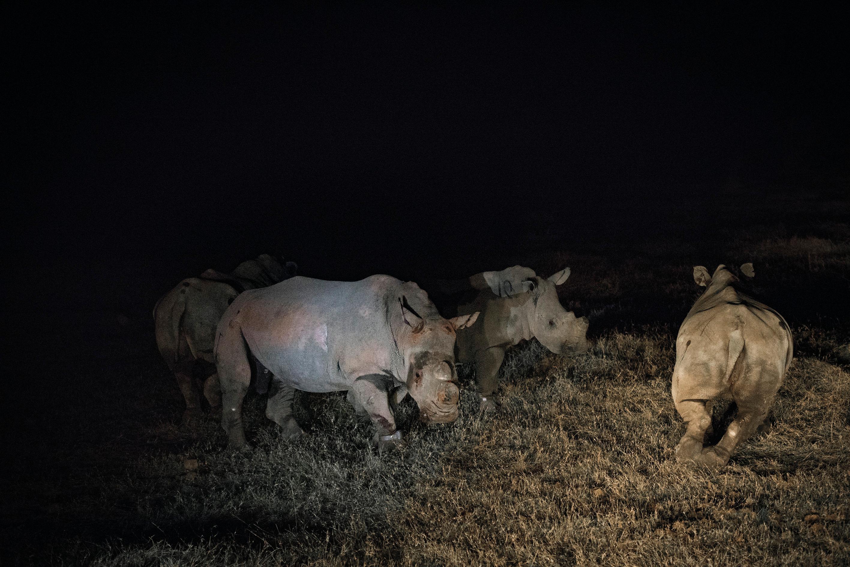 Van Niekerk's rhinos