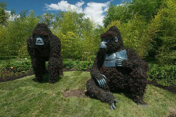 Uganda entered Gorillas at Risk