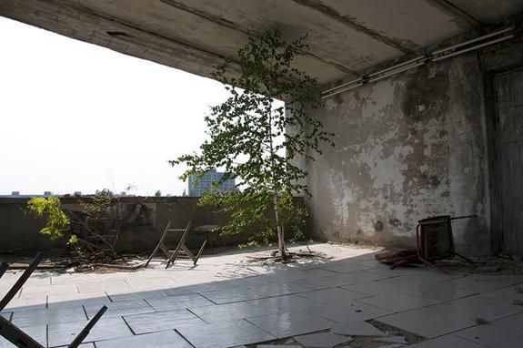A tree grows in the Polissya Hotel in Pripyat.