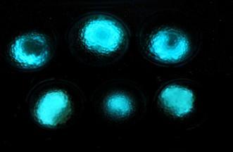 luminous microbial beads.jpg