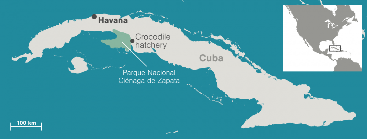 map-cuban-crocodiles2-1200x456.png