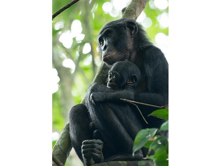 bonobos-pair.jpg