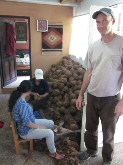 Coconuts are piled high