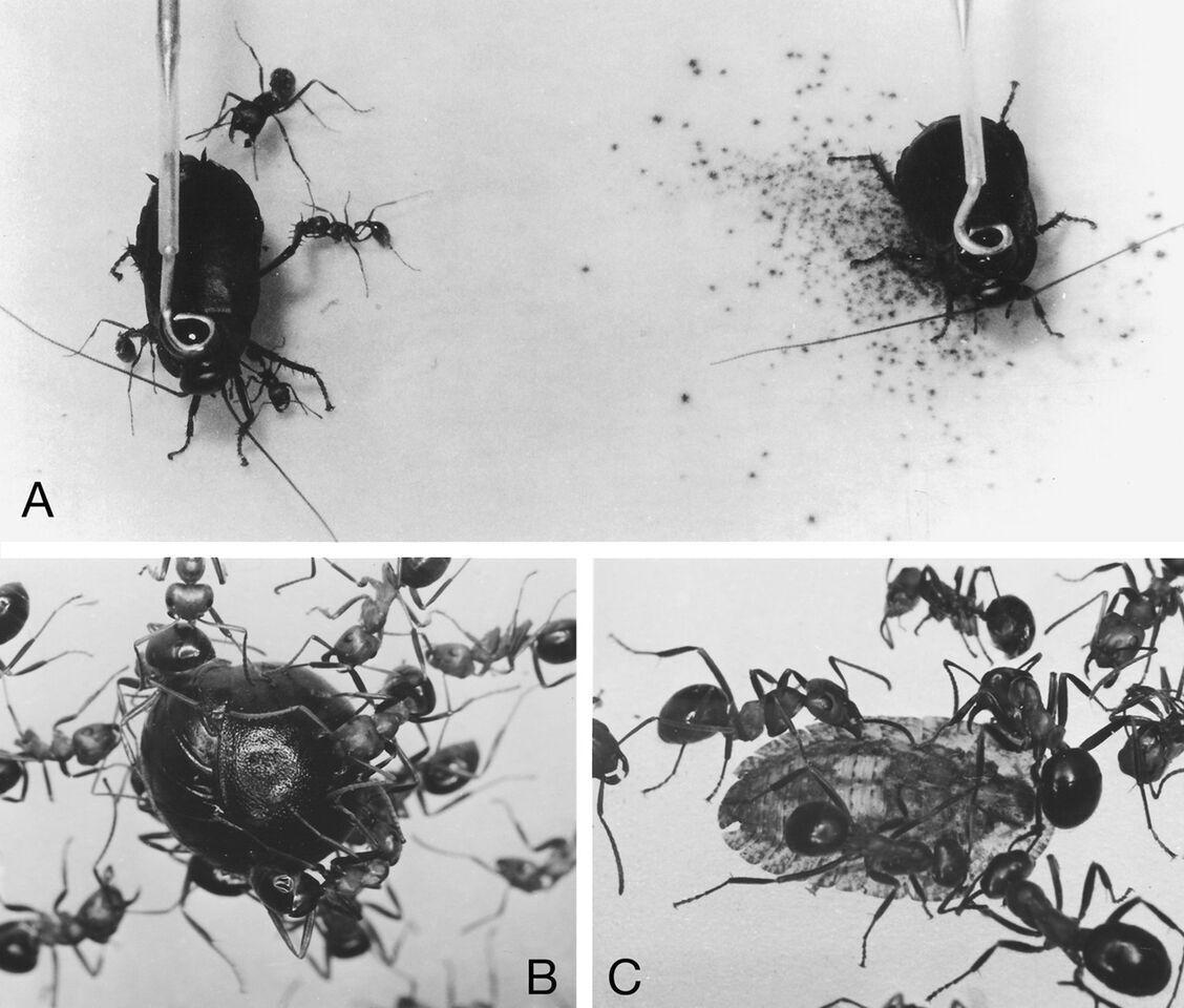 Cockroach1.jpg