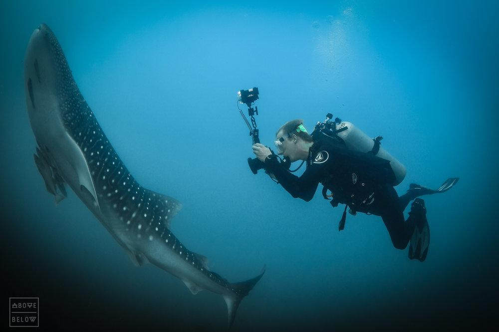 Briggs photographing a juvenile male whale shark in Cabo Pulmo, Mexico.-2.JPG