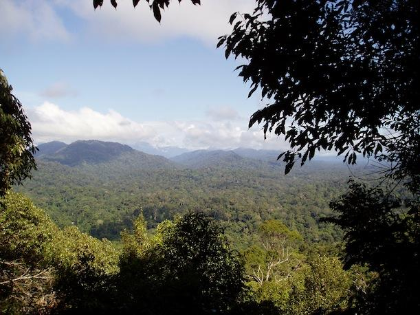 The Malaysian rainforest, one of the biodiverse areas that will be hit soonest by climate change.