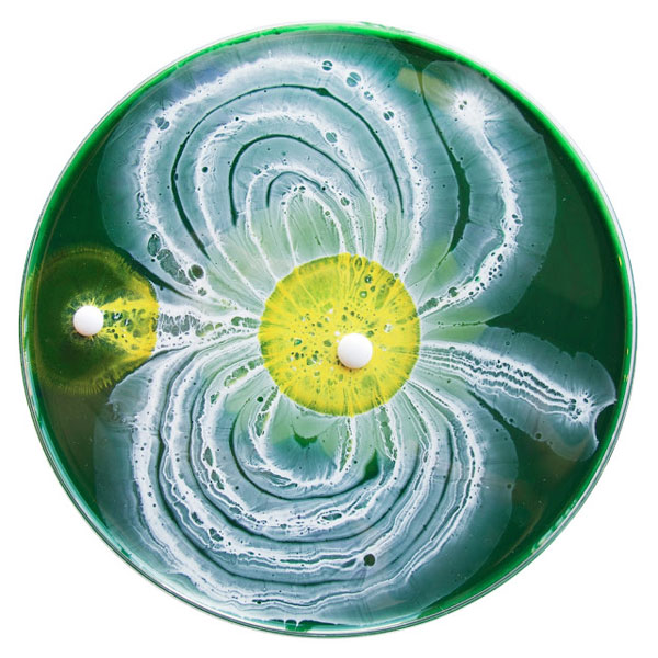 April 1, 2013: Abstraction of Daisies, by Klari Reis.