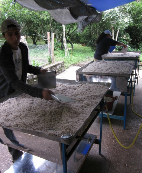 Freshly ground coconut shavings