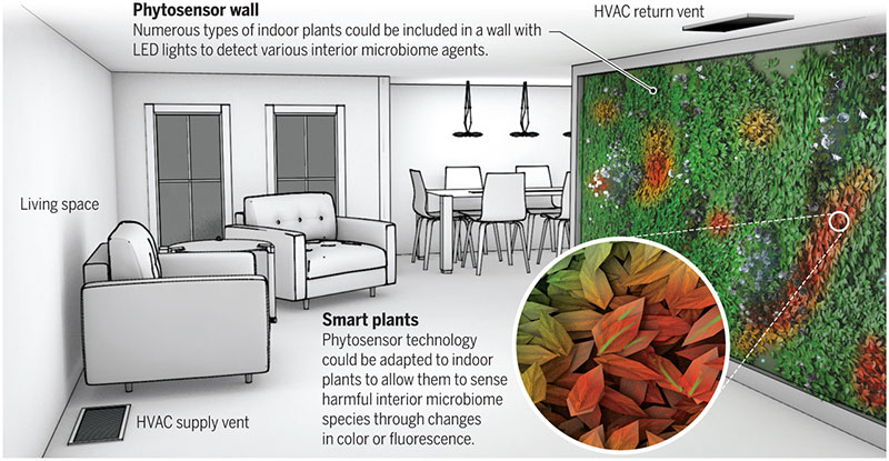 plant-wall.jpg