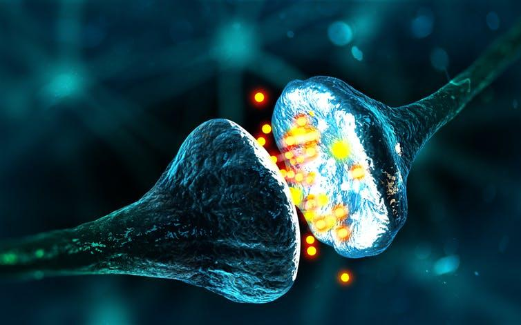 Neurotransmitters are the brain's chemical messengers.