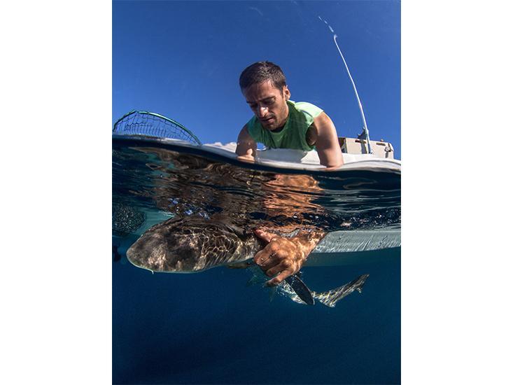 holding-shark.jpg