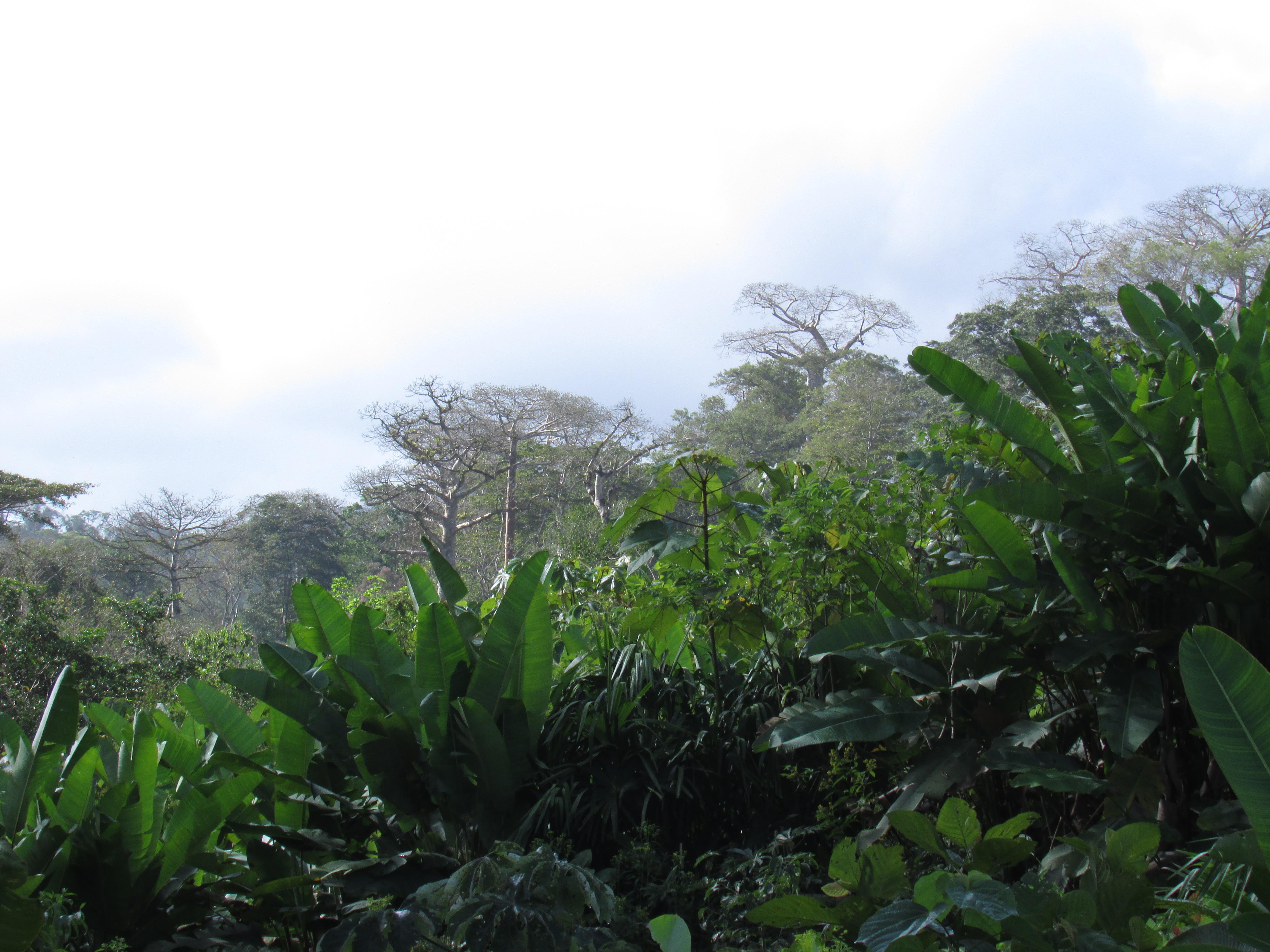 Bosques de Ipeti