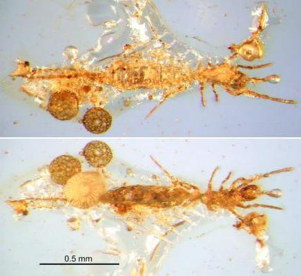 Microwhip Scorpion