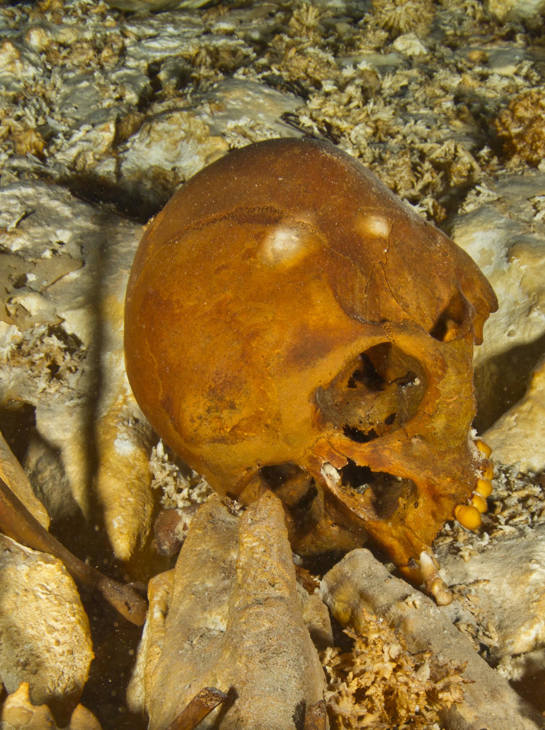 skull of Naia