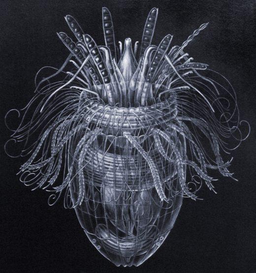 Pliciloricus enigmaticus