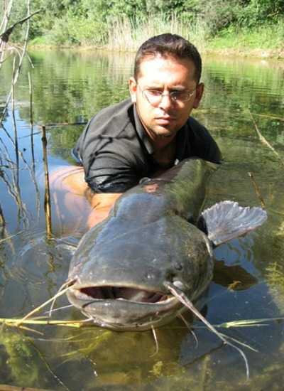 The European wels catfish, shown here, has become the target of Old World noodlers.
