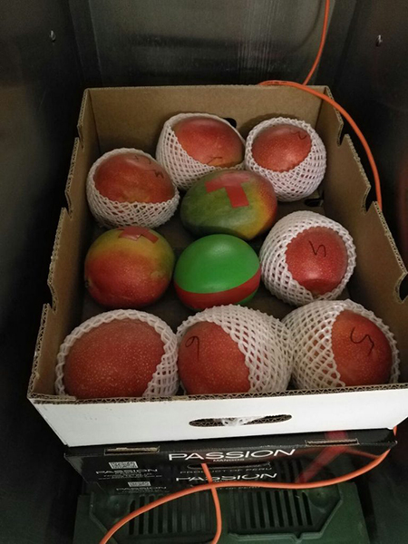 Mangosensor.jpg