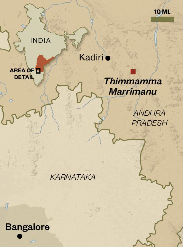 Thimmamma Marrimanu