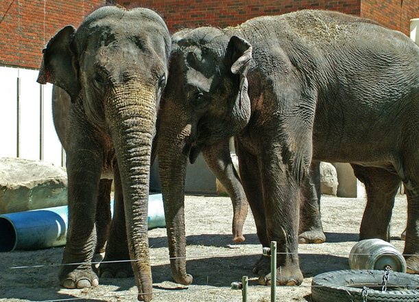 Maharani (left) and Kamala (right) will come to Washington in the spring of 2014.