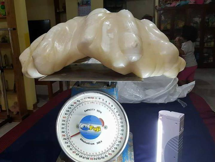 Giant pearl is weighed