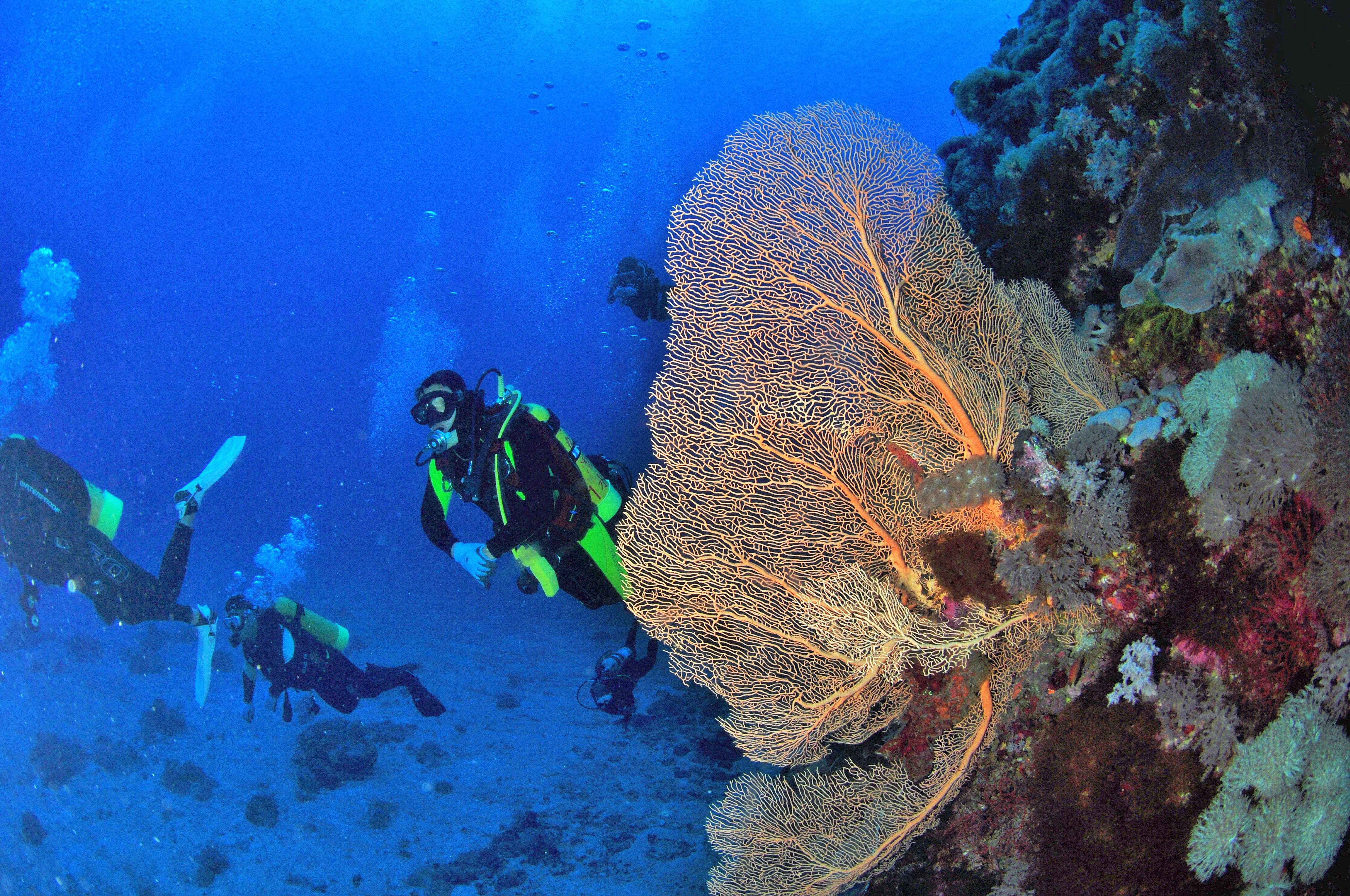 Scuba Diving-Green Island.JPG