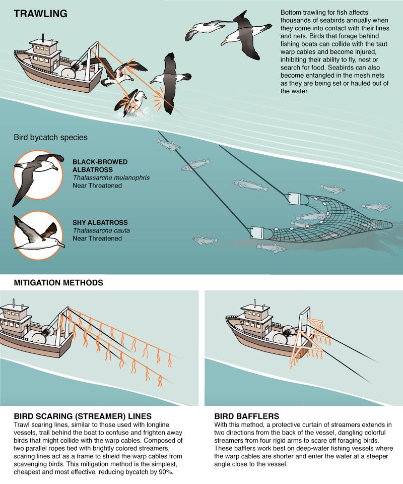 trawl.png