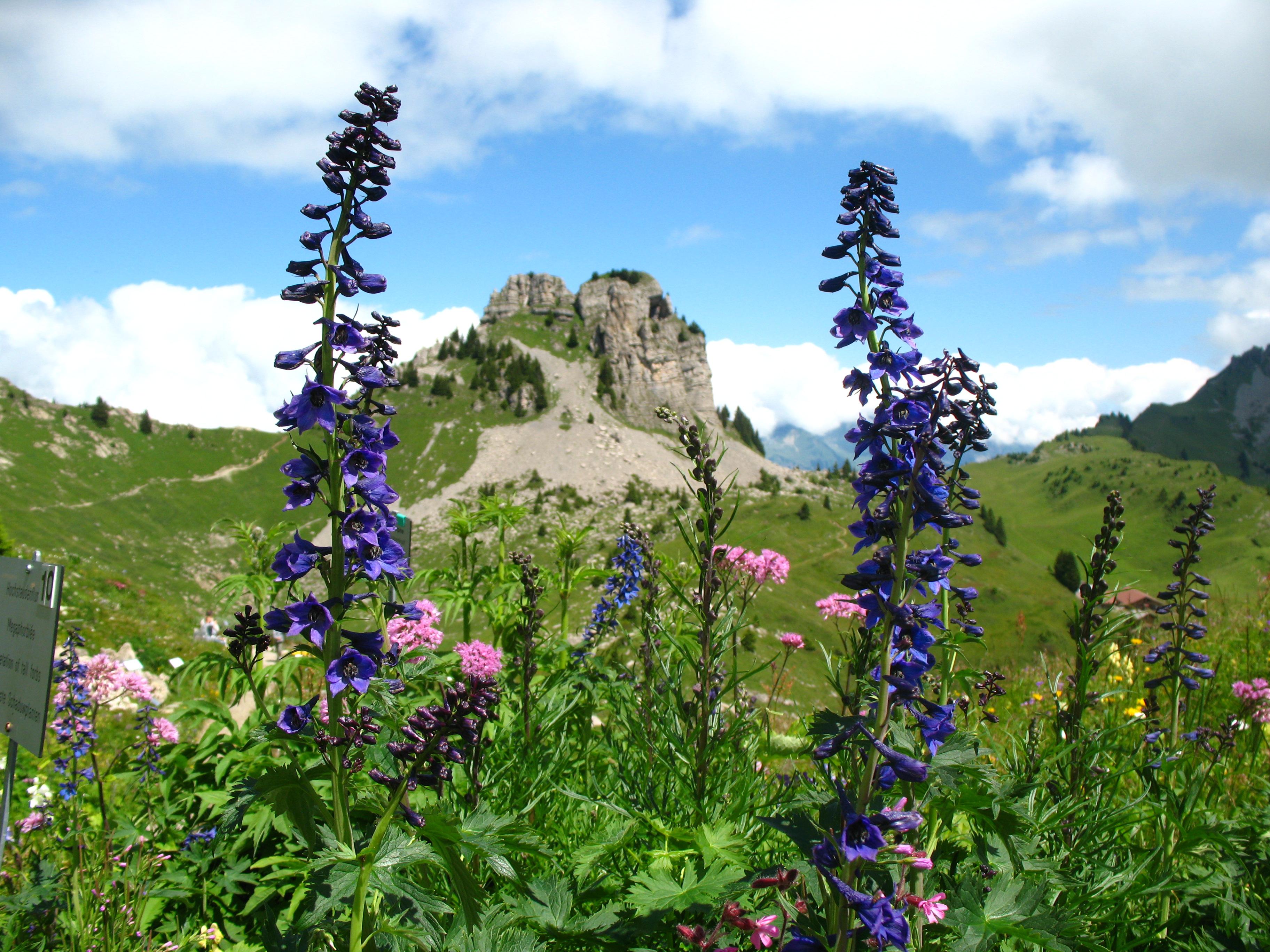 Switzerlands Most Beautiful Alpine Gardens Travel Smithsonian