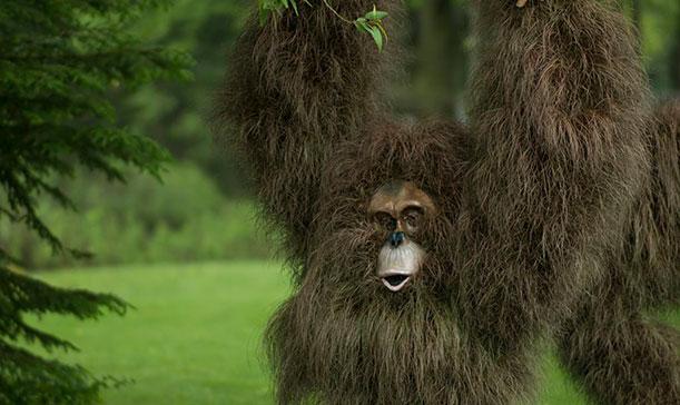 Bornean and Sumatran orangs