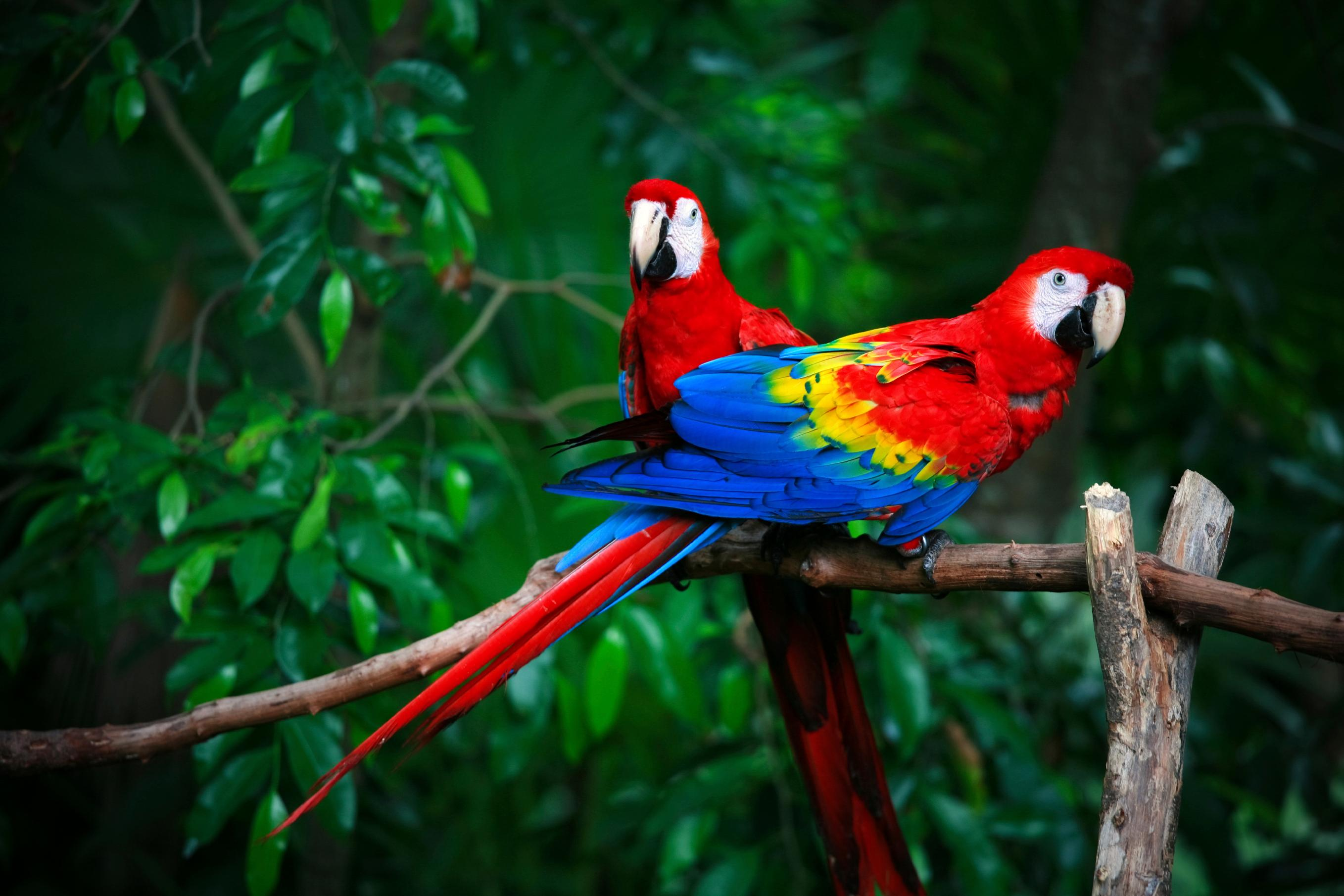 14 fun facts about parrots science smithsonian