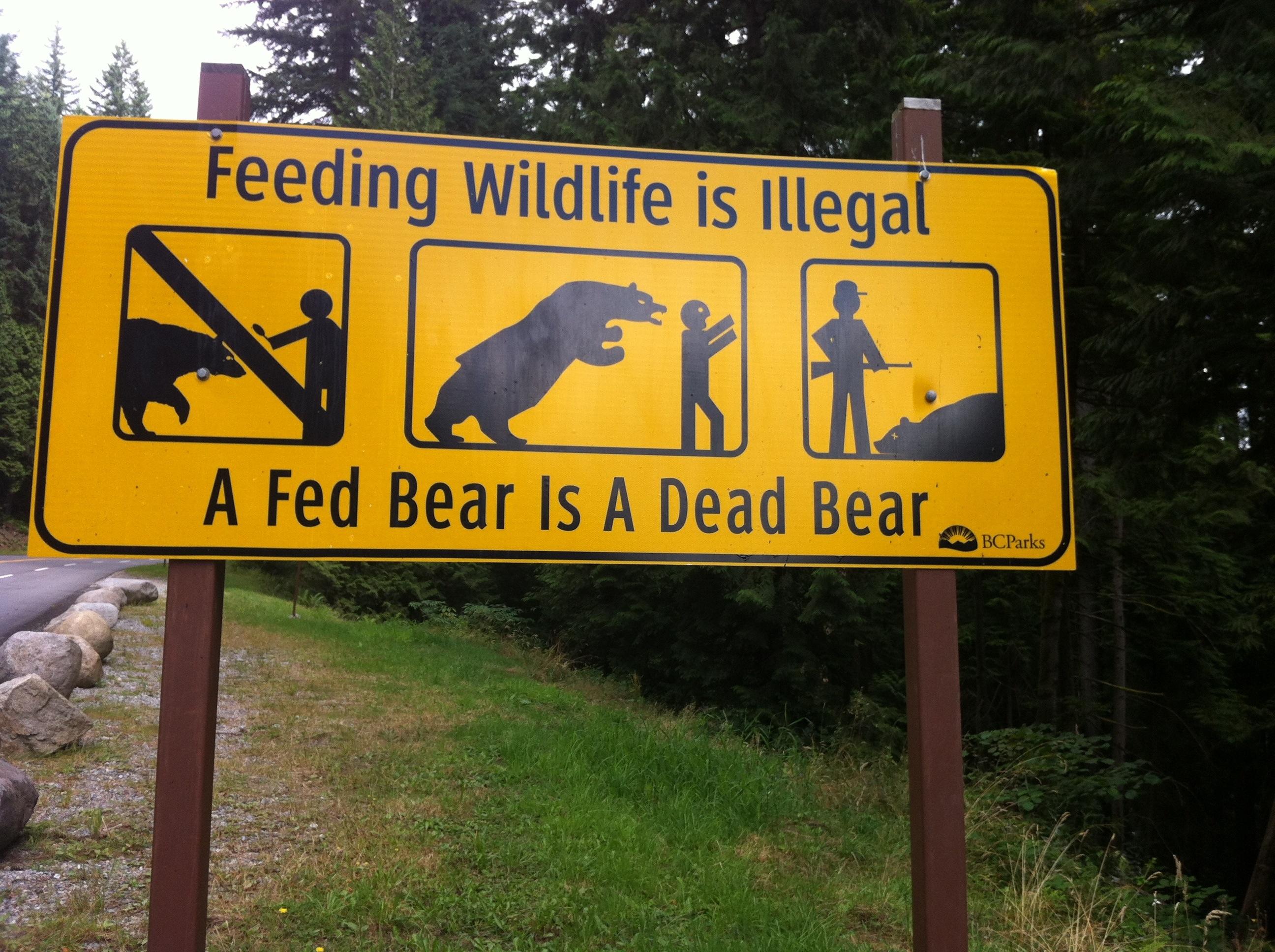 feeding wildlife illegal fed bear dead bear