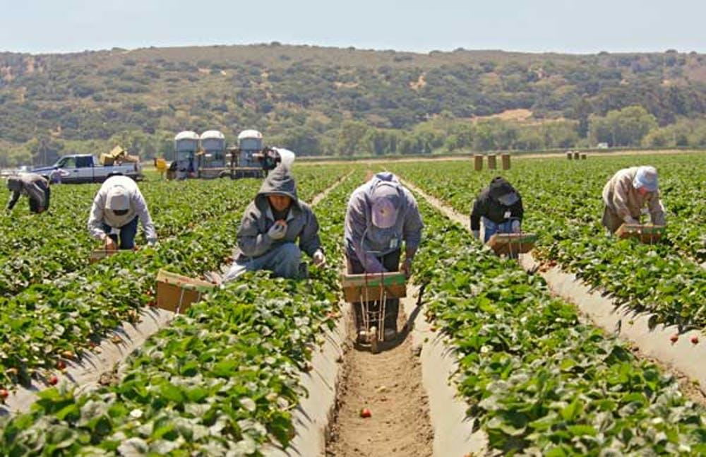 Strawberry pickers in Salinas, Calif., photographed April 27, 2009