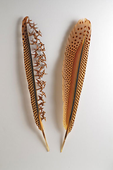 Great Argus pheasant wing feathers