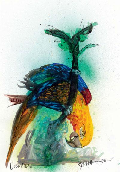 Cuban Macaw, by Ralph Steadman