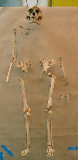 A replica of a partial set of Homo floresiensis bones made by the 3-D printer.