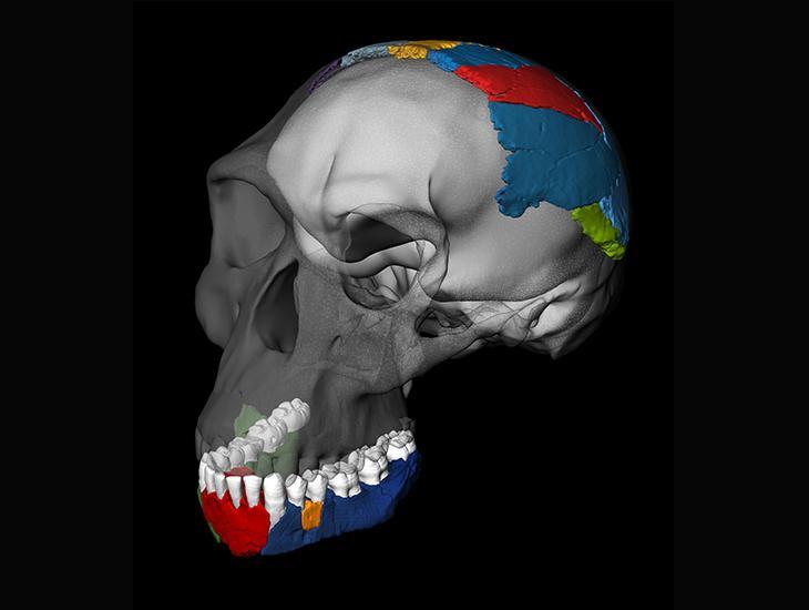 Virtual Skull