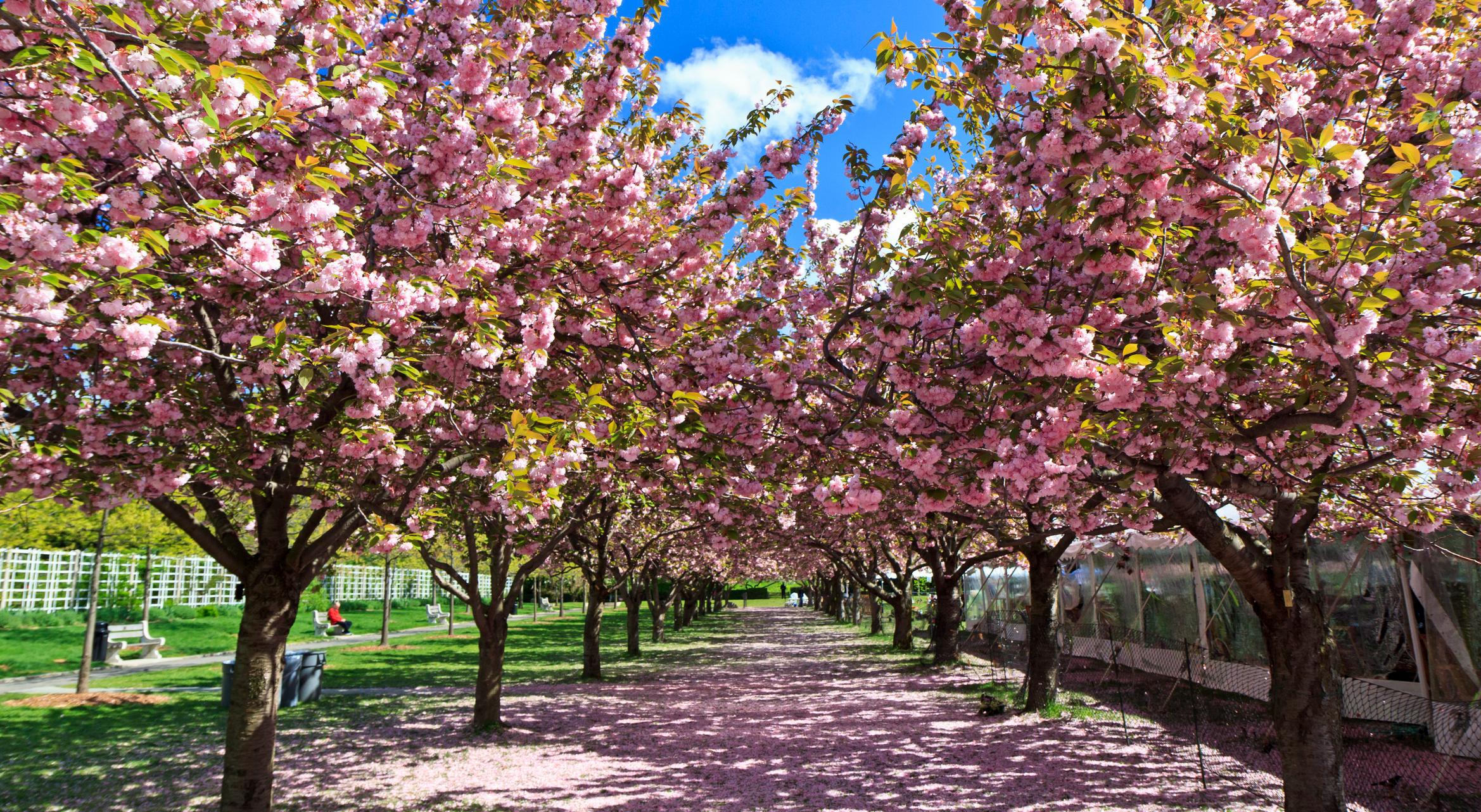 This Friday, You Can Visit More Than 150 of the Best Gardens in the ...