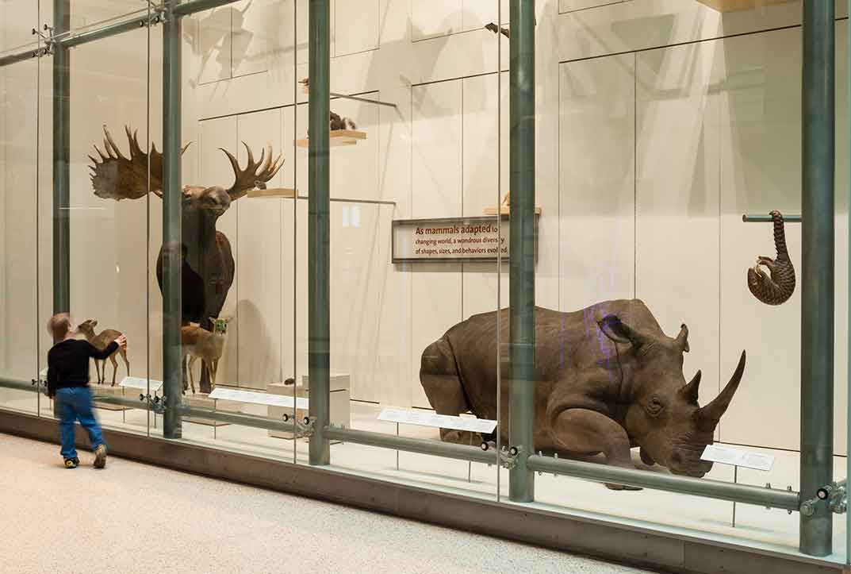 White Rhino Natural History Museum