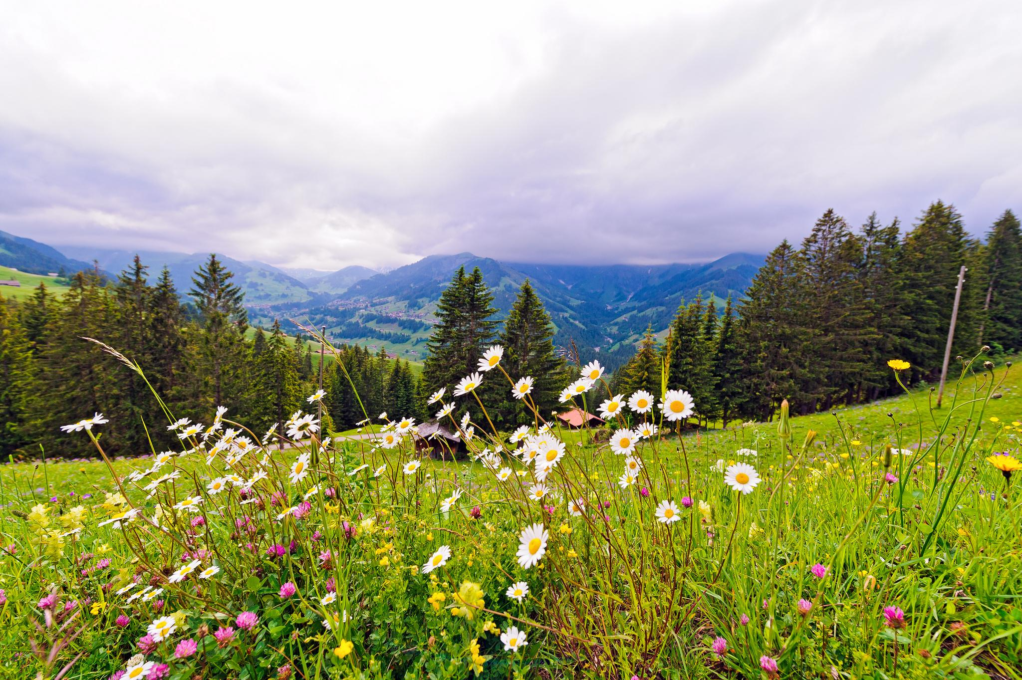 Switzerlands Most Beautiful Alpine Gardens