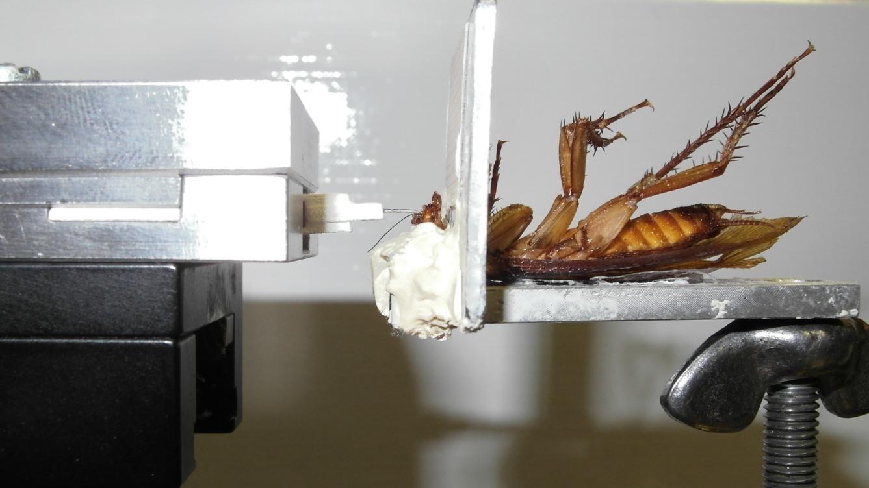 Cockroach Setup